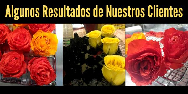 Preservar Rosas